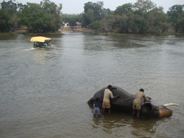 Dubare, Elephant Bathing